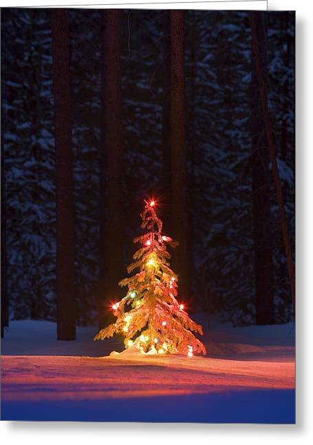 Lit Christmas Tree In A Forest Greeting Card by Carson Ganci