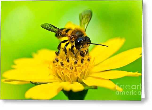 Little Bee In Yellow Flower Greeting Card by Peerasith Chaisanit