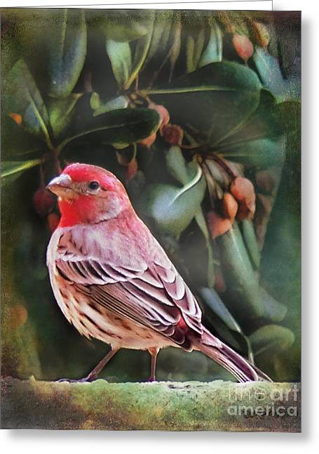 Greeting Card featuring the digital art Little Bird Iv by Rhonda Strickland