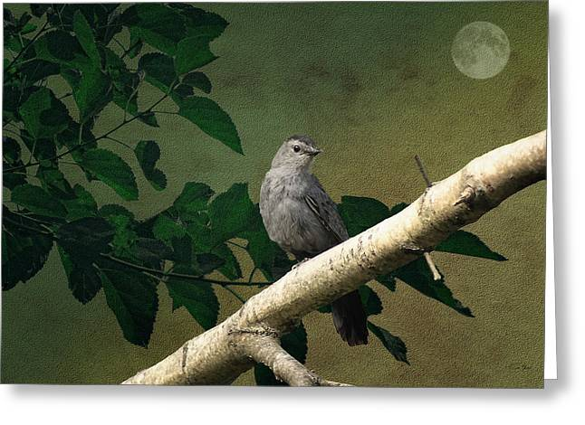 Little Bird Greeting Card by Tom York Images
