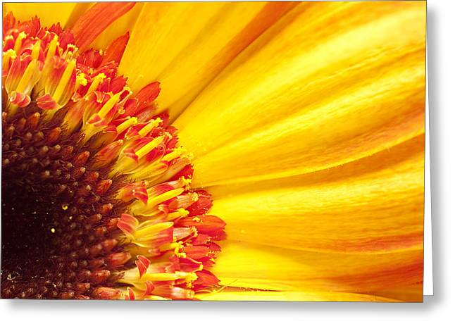 Greeting Card featuring the photograph Little Bit Of Sunshine by Eunice Gibb