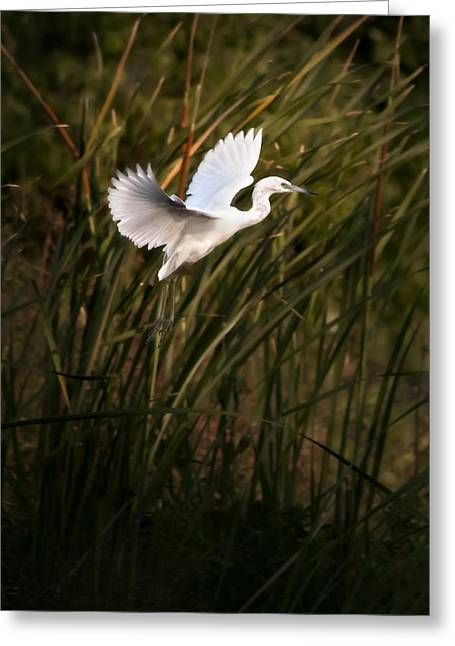 Greeting Card featuring the photograph Little Blue Heron On Approach by Steven Sparks