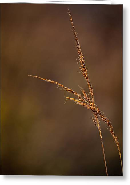 Little Bluestem On The Prairie Greeting Card by Steve Gadomski