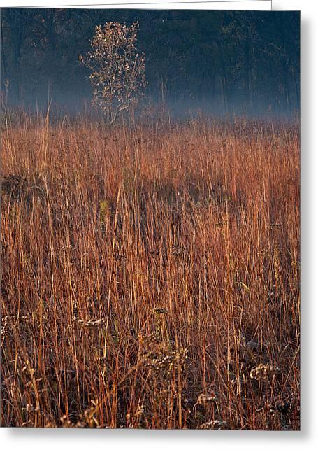 Little Bluestem Prairie Grass Greeting Card