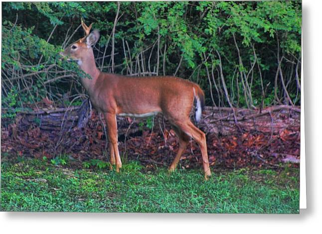 Little Buck Greeting Card by Rick Friedle