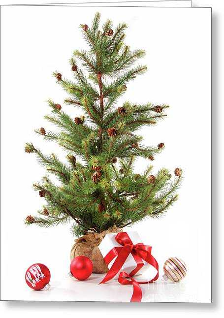 Little Christmas Tree With Red Ribboned Gifts On White  Greeting Card by Sandra Cunningham