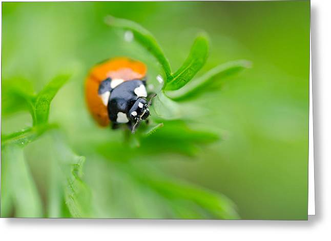 Little Climbing Lady Bug Greeting Card
