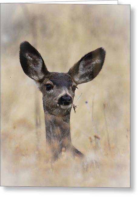 Little Fawn Greeting Card by Steve McKinzie