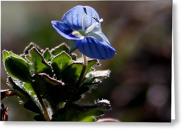 Little Flower Greeting Card