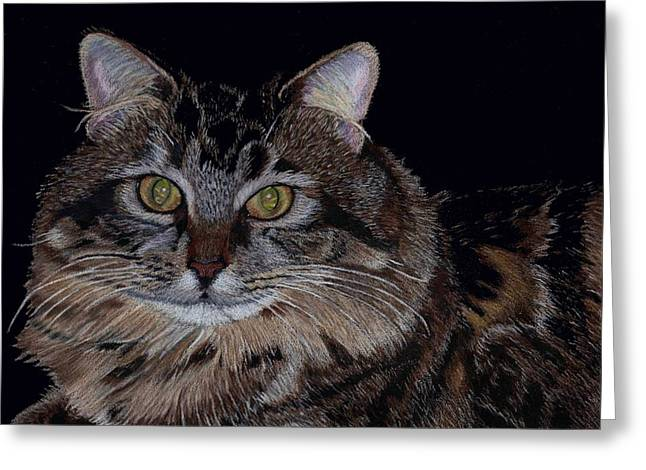Little Girl - Maine Coon Cat Painting Greeting Card