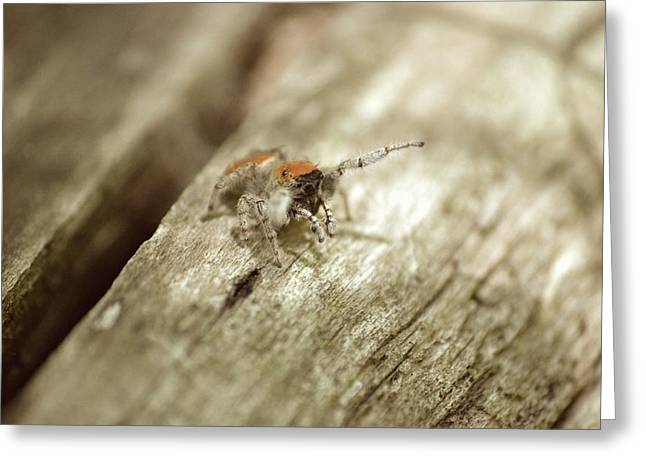 Greeting Card featuring the photograph Little Jumper In Sepia by JD Grimes