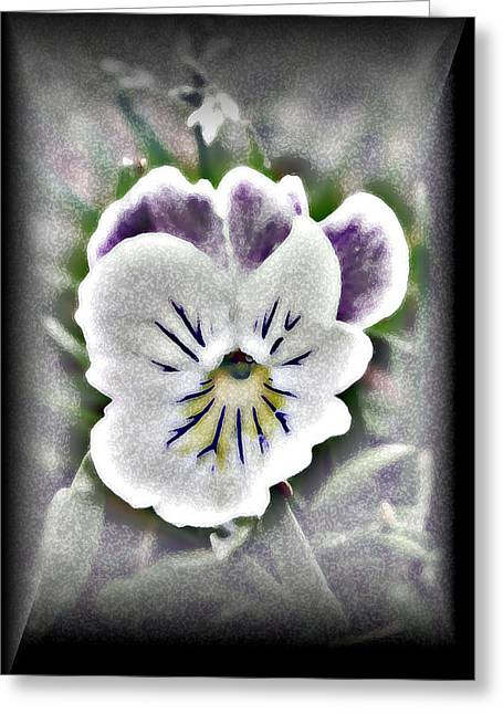 Little Pansy Greeting Card by Karen Harrison