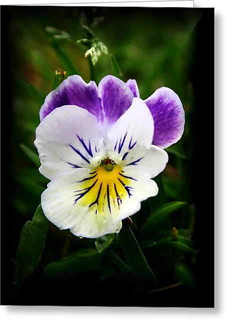 Little Pansy2 Greeting Card
