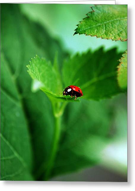 Little Red Lady Greeting Card
