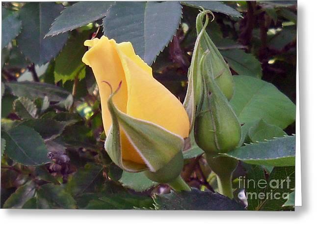Little Rose Bud Saying Prayers Greeting Card by Doris Blessington
