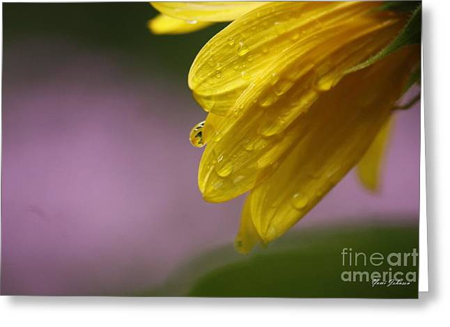 Greeting Card featuring the photograph Little Sunflower by Yumi Johnson