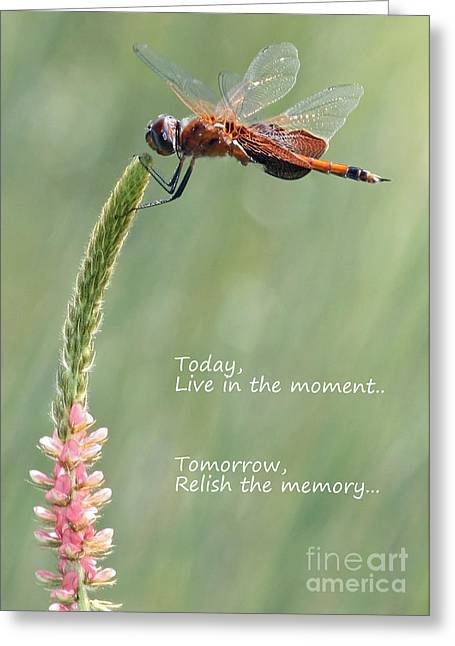 Live In The Moment  Greeting Card by Carol Groenen