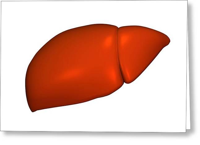 Liver, Artwork Greeting Card by Friedrich Saurer