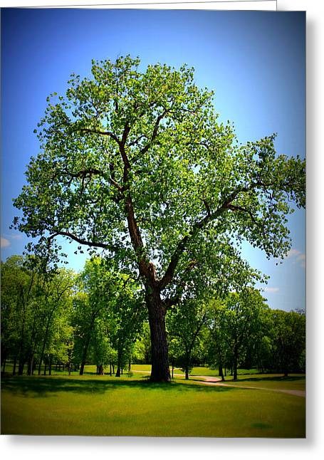 Old Green Tree Greeting Card by Inspired Arts