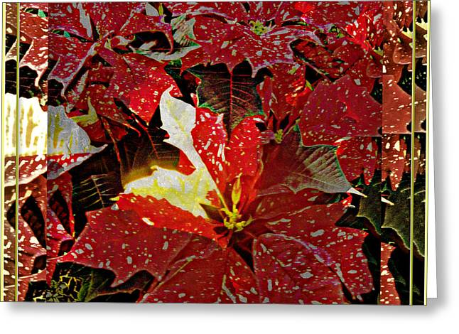 Living Light Of Poinsettias  Greeting Card by Mindy Newman