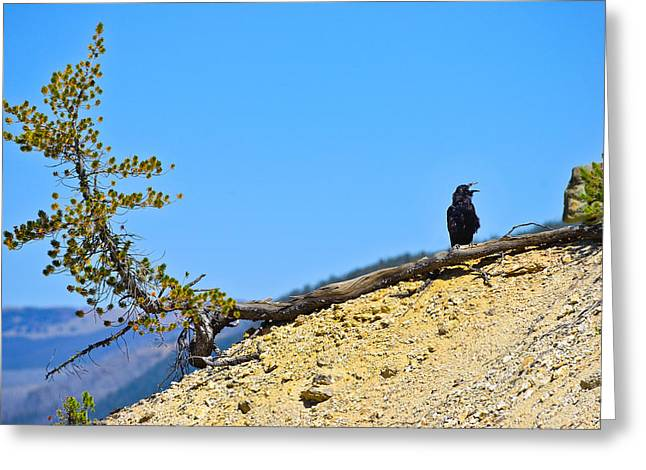 Living On The Edge Greeting Card by Greg Norrell