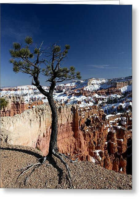 Greeting Card featuring the photograph Living On The Edge by Karen Lee Ensley