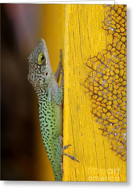 Lizard Greeting Card by Sophie Vigneault