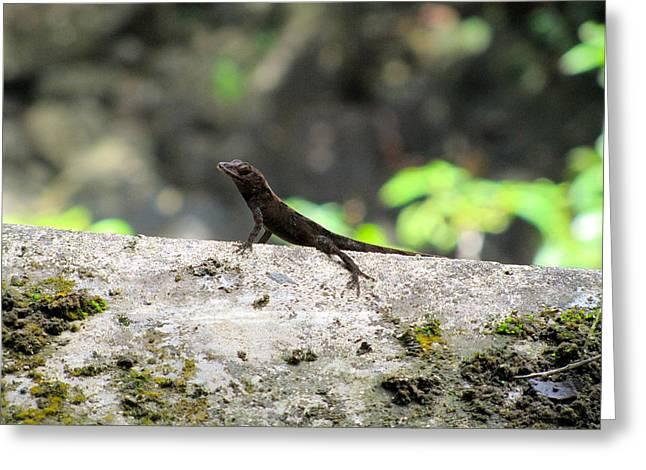 Lizard Greeting Card by Tamika Carroll