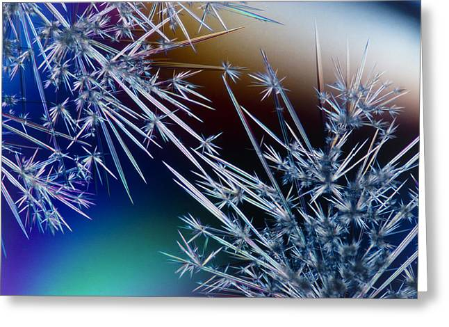 Lm Of Crystals Of Antibiotic Streptomycin Greeting Card by David Parker