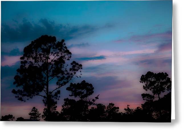 Loblelly Pine Silhouette Greeting Card by DigiArt Diaries by Vicky B Fuller