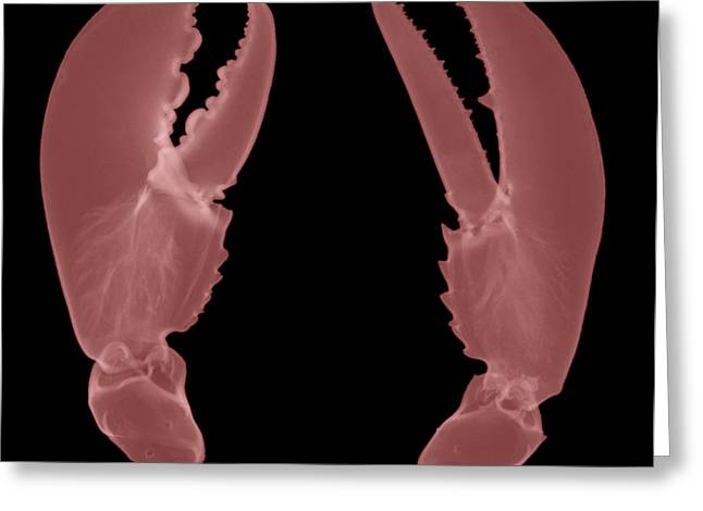 Lobster Claws X-ray Greeting Card by Ted Kinsman