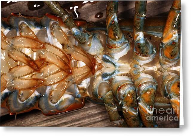 Lobster Female Sex Organs Greeting Card by Ted Kinsman