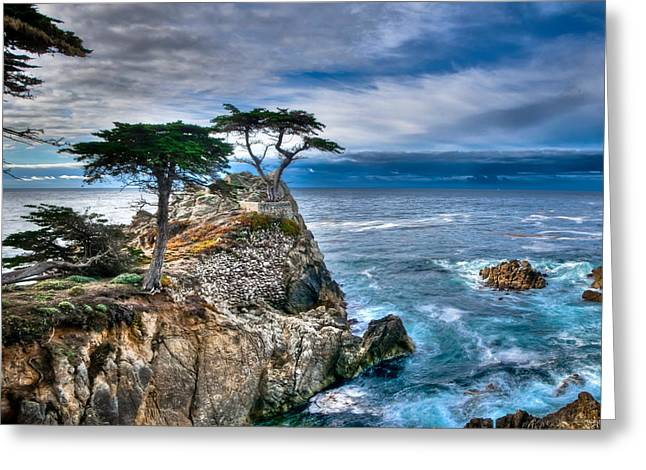 Lone Cypress Morning Greeting Card by Connie Cooper-Edwards