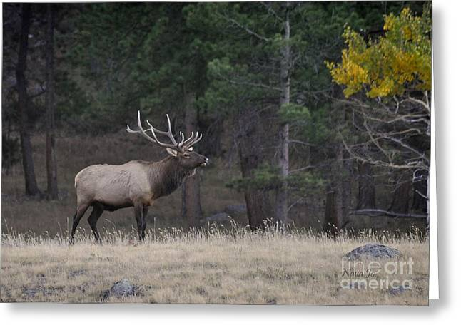 Greeting Card featuring the photograph Lone Elk Warrior by Nava Thompson