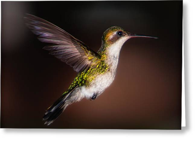 Lone Hummingbird Greeting Card