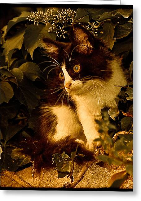 Athens, Greece - Lone Kitten Greeting Card