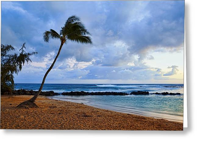 Lone Palm Greeting Card by Kelley King