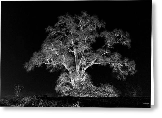 Greeting Card featuring the photograph Lone Tree 002 by George Bostian