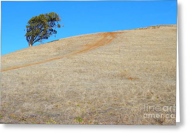 Lone Tree At Coyote Hills California . 7d10906 Greeting Card by Wingsdomain Art and Photography