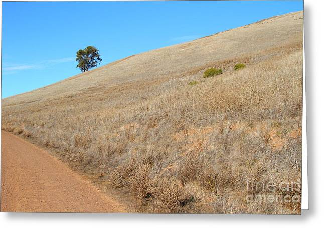 Lone Tree At End Of The Trail At Coyote Hills California . 7d10920 Greeting Card by Wingsdomain Art and Photography