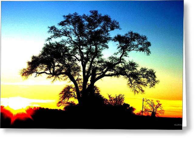 Greeting Card featuring the photograph Lone Tree At Sunrise by George Bostian