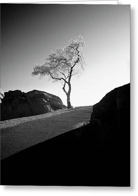 Lone Tree Greeting Card by G Wigler