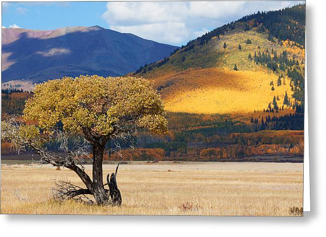 Greeting Card featuring the photograph Lone Tree by Jim Garrison