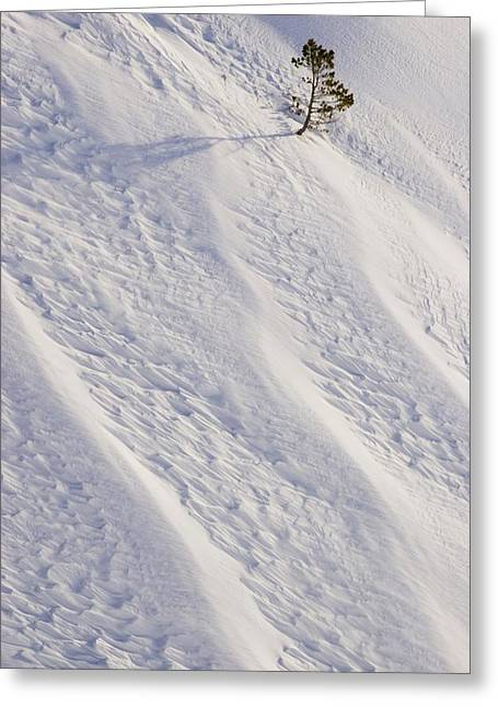 Lone Tree On Mount Hood In Winter Mount Greeting Card by Craig Tuttle