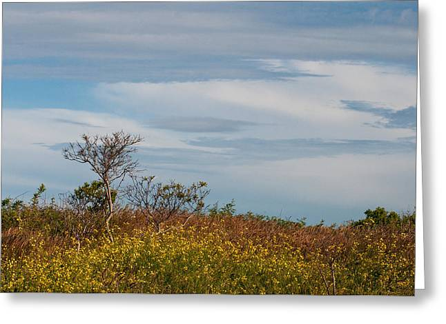 Greeting Card featuring the photograph Lone Tree On The Rhode Island Coast by Nancy De Flon