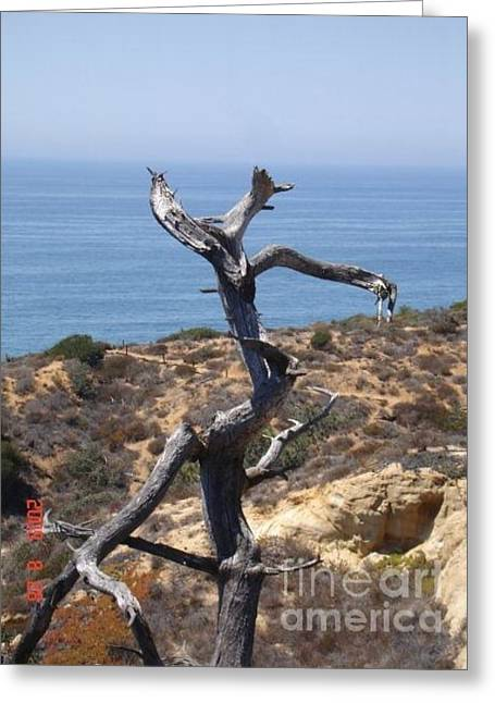 Lone Tree San Diego Greeting Card by Carol Wright