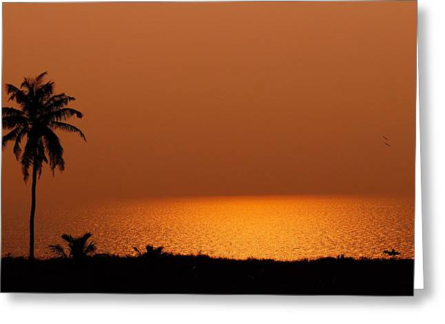 Lone Tree Silhouette During Sunset Greeting Card by Hegde Photos