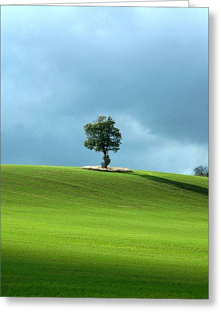 Lone Tree Sintinel Greeting Card by Duncan Nelson