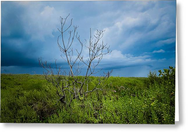 Lone Tree Greeting Card by VJ Musick