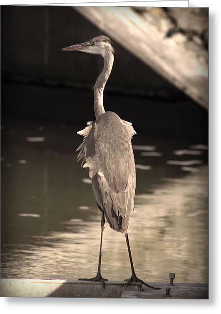 Lonely Flamingo Bird Greeting Card by Radoslav Nedelchev